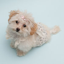 Louis dog Rompers Pet Supplies