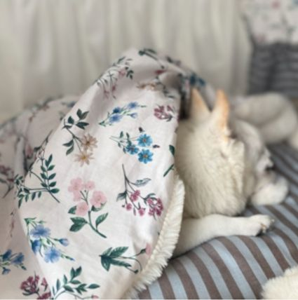 Louis dog Blankets & Quilts