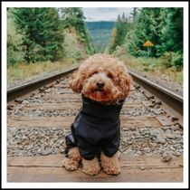CANADA POOCH More Pet Supplies Street Style Rompers Pet Supplies 4