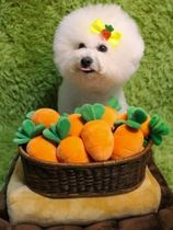 Pet dog toy carrot field nose work