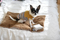 My Fur Baby Blankets & Quilts